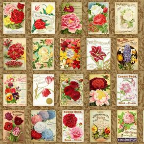 Vintage Seeds - A