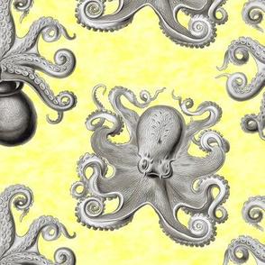 Haeckel's octopus gray+yellow ink