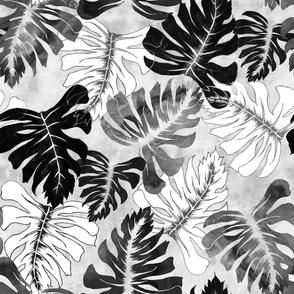 Phoenix Tropical balck and white