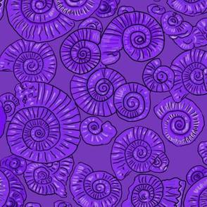 Geology Ammonites