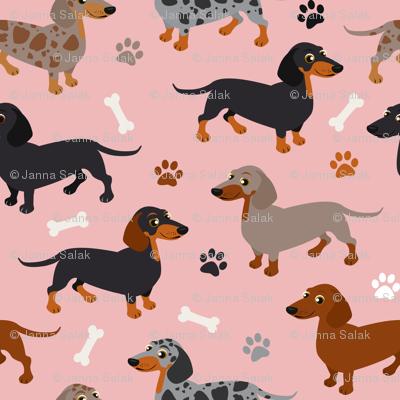 Dachshund Dogs Pink