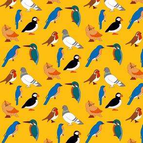 Bird Medley