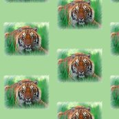Rrrwatchfultiger_shop_thumb