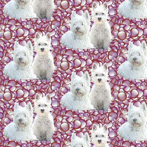 westies with bubbles