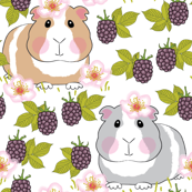 guinea-pigs-with-blackberries-on-white