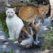 Rmostly-marmalade-cats-montage_shop_thumb