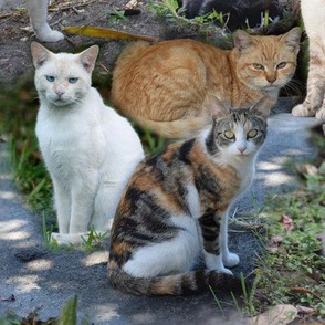 Mostly Marmalade Cats Montage, Large scale