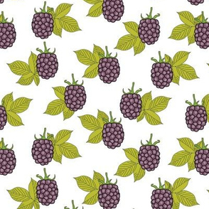 purple blackberries on white