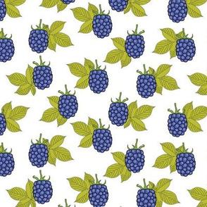 blue blackberries-on-white