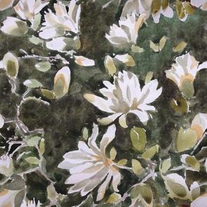 Star Magnolia watercolor