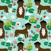 Rpitbull-frogs-graduation_shop_thumb