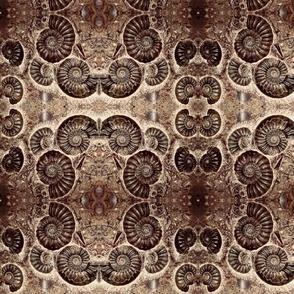 Spiral fossils
