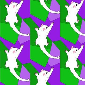 Leucistic Sugar Glider on Green Purple Shapes