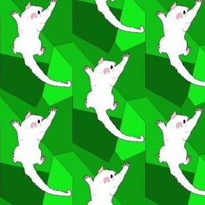 Leucistic Sugar Glider on Green Shapes