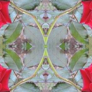 Danny's Rose