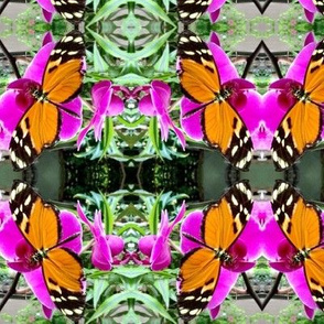 Orange butterfly orchid damask Lg