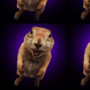 squirrel on purple