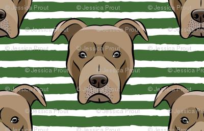 Pit bull on stripes (pine)