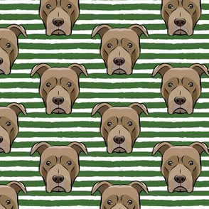 Pit bull on stripes (pine)