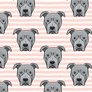 Grey Pit bull on stripes (pink)