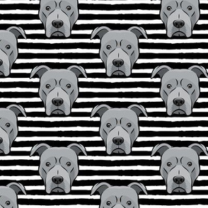 Grey Pit bull on stripes (black)