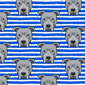 Grey Pit bull on stripes (blue)