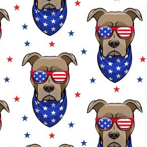 patriotic Pit Bull white with stars