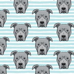 Grey Pit bull on stripes (blue)