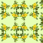 2941 Hibbertia#2 Green