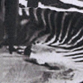 Panel 1 - Black Photographs-01