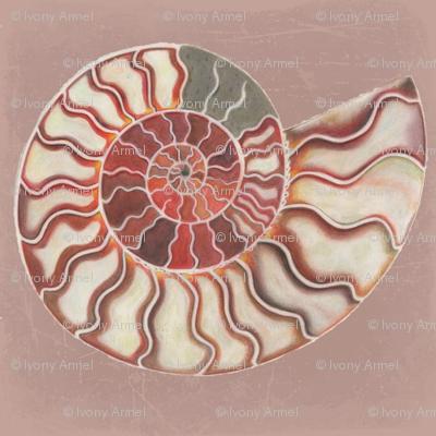 Pearled Ammonite