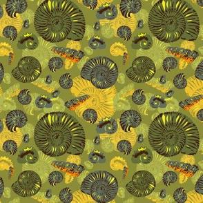 ammonites - small