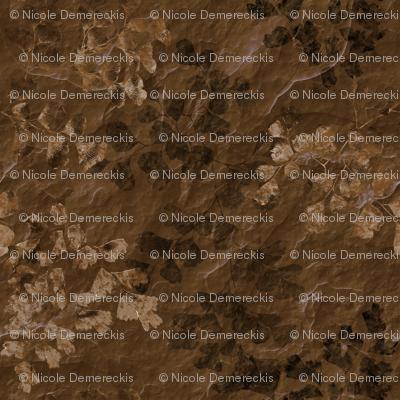 Fern Fossils on Brown Slate