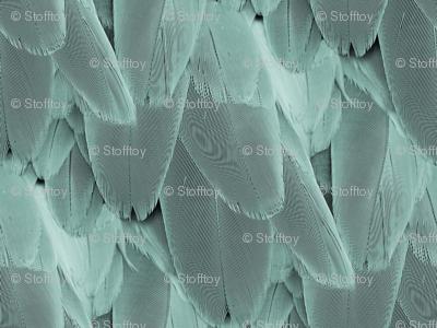 bird feather - teal