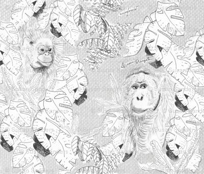 Orangutan and Rainforest-grey