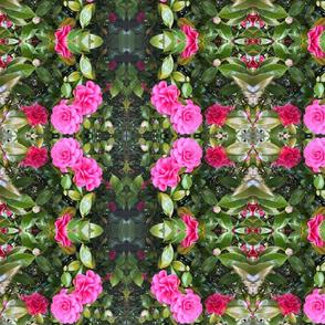 Pink Camellia Mirror