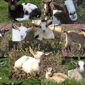 Goat Kids Barnyard Farm Animals