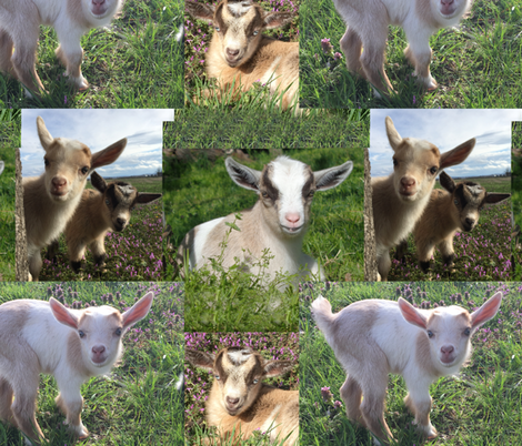 Goat Kid Farm Barnyard Animal  fabric by decamp_studios on Spoonflower - custom fabric