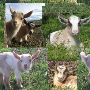 Goat Kid Farm Barnyard Animal