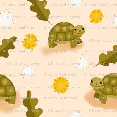 Tortoise in Dandiland