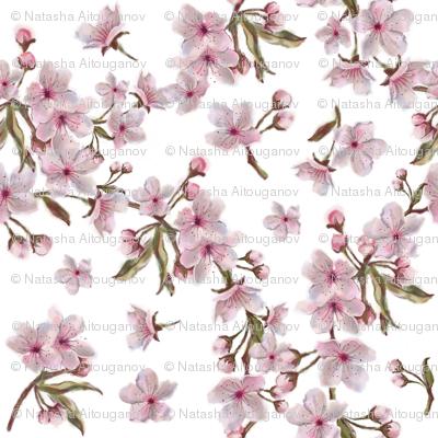 Sakura Wreath Pattern Isolated on white