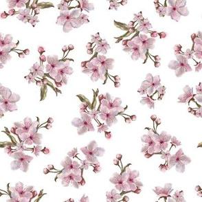 Sakura Inflorescence Pattern on White