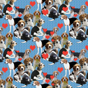 Beagles and Hearts