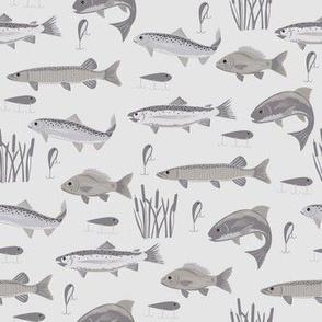 Fish Freshwater Gray Small