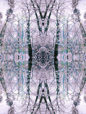 Winter (Lavender & Teal)