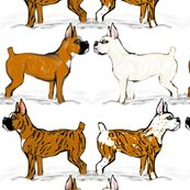 Rrassorted-boxer-dogs-in-snow_shop_thumb