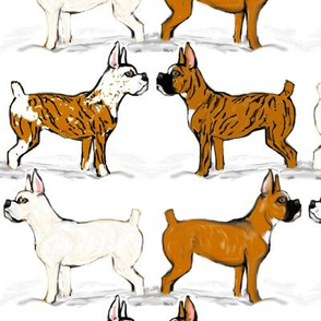 Assorted Boxer Dogs in Snow 2