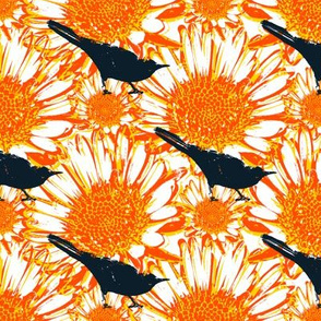 Blackbirds & Calendulas 2