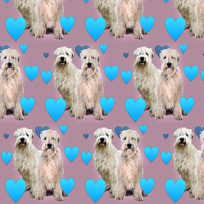 Wheaten Terriers and Hearts