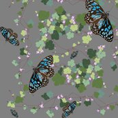 Raustralian-native-violet-and-blue-butterfly-grey_shop_thumb